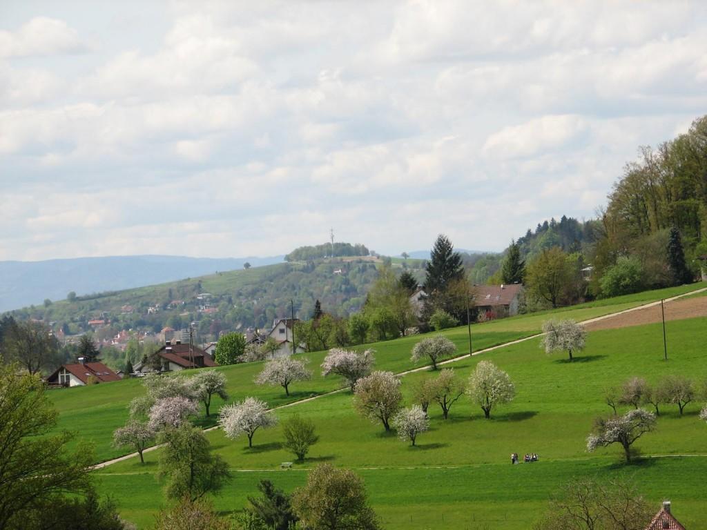 Blick auf den Lahrer Schutterlindenberg