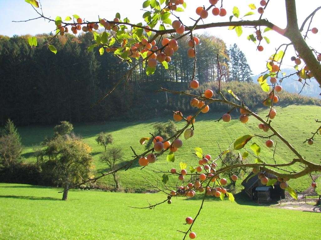 Herbst im Gereutertal